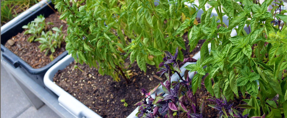 How To Grow Veggies At Your Apartment Or Condo Sustainability