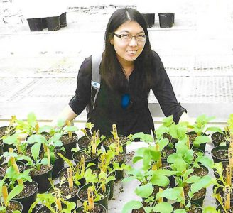 Sarah Yim's experiment included 80 plants.