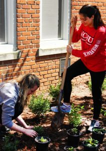 A class of University Honors students designed and planted a pollinator-friendly garden in the Honors Quad during the spring 2016 semester. Photo courtesy of Justin Hammond
