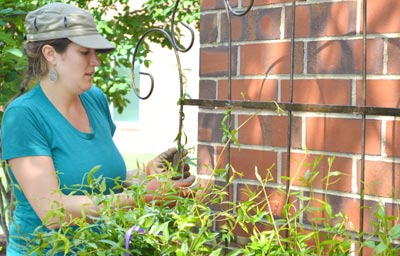 Garden, bees boost sustainability at College of Veterinary Medicine