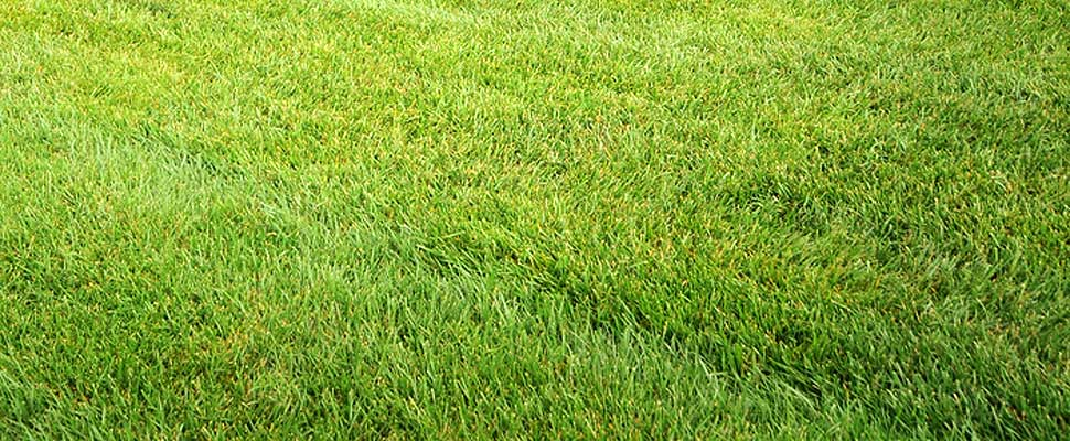 5 Tips for a Fuss-Free, Eco Friendly Lawn