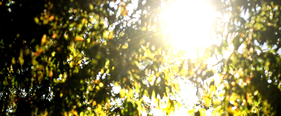 Shining Light on What Natural Light Does For Your Body