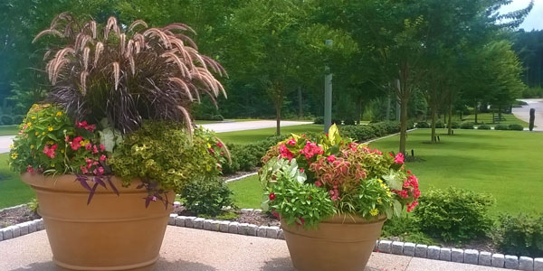 Sustainable student-grown plants adorn Chancellor's residence