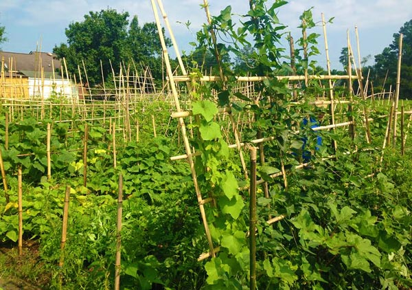 Growing local food access among Triangle's immigrant communities