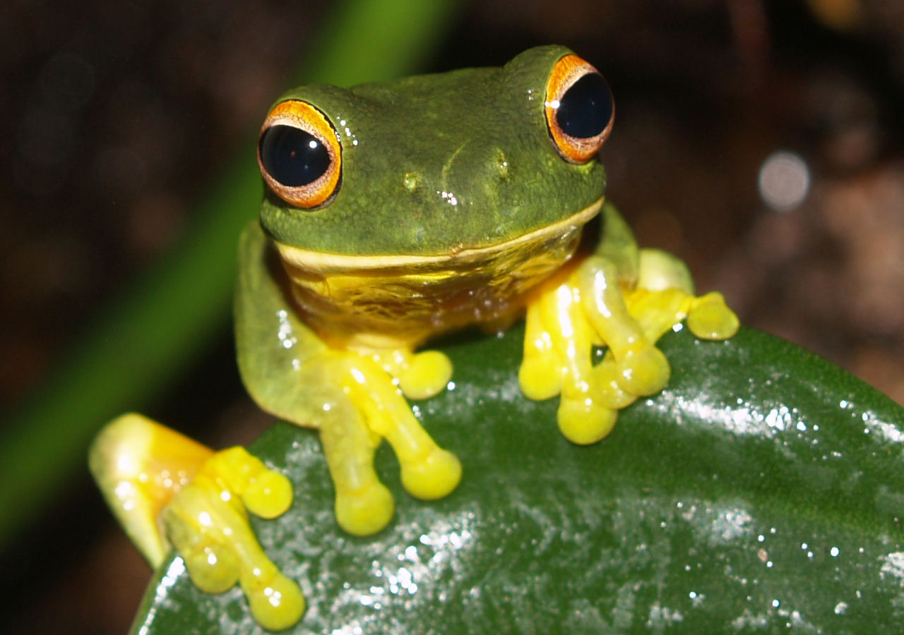 Crafts Center To Host Exhibit On World's 'Disappearing Frogs'