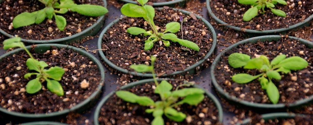 safe-soil
