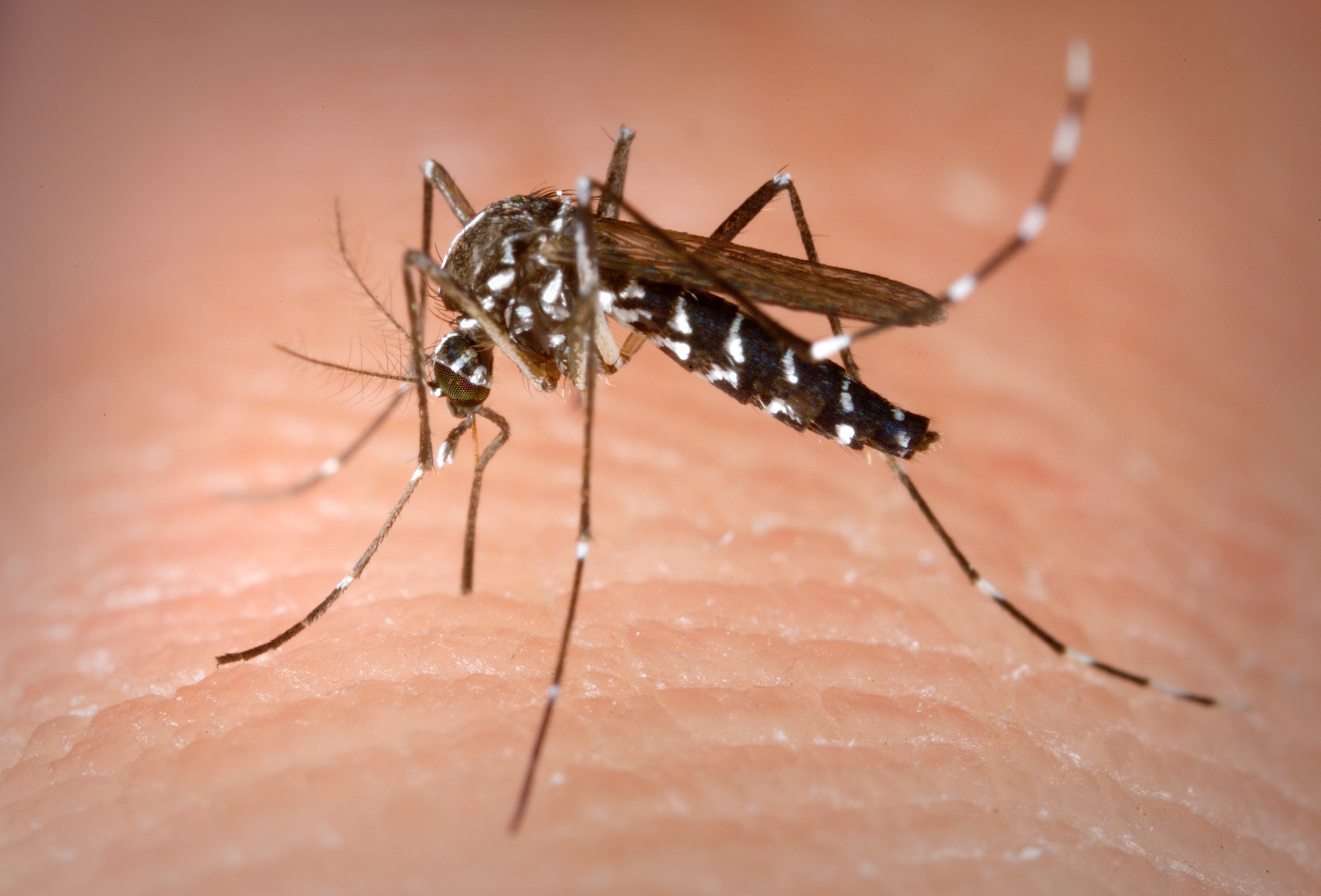How to Limit Mosquito Exposure