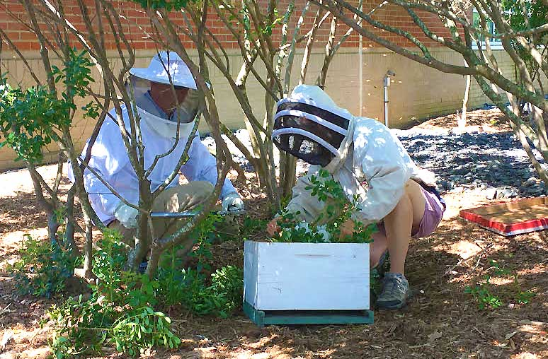 Collaboration Leads to Campus Bee-Saving Effort
