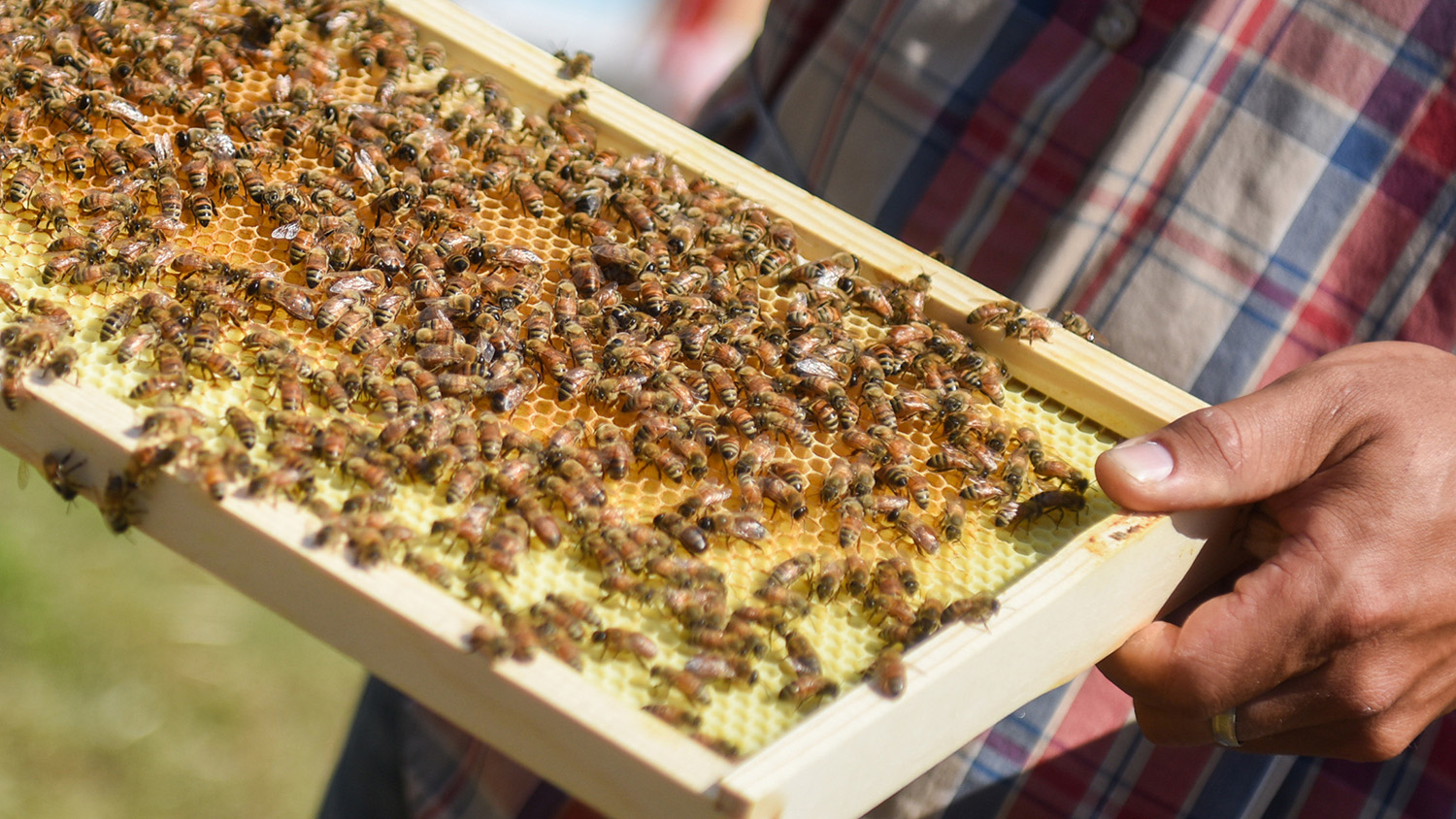 Bee the Change: New Apiary on Centennial Campus