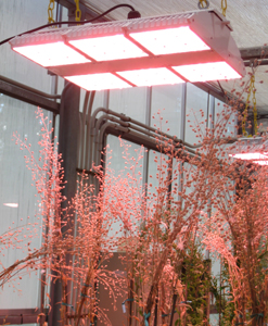 These LED greenhouse lights use just 35 percent of the energy consumed by traditional metal halide lamps.