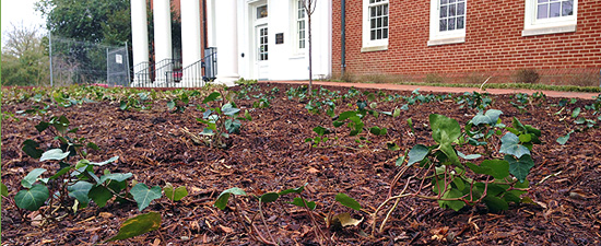 sustainable-mulch
