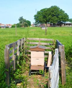 Sandwiched between pasture and a pond, the apiary is home to one hive of honey bees that provide additional pollination for that area of campus.